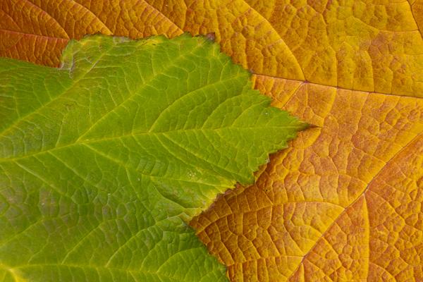 Title Image Flora